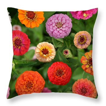 Zinnia Garden Throw Pillow
