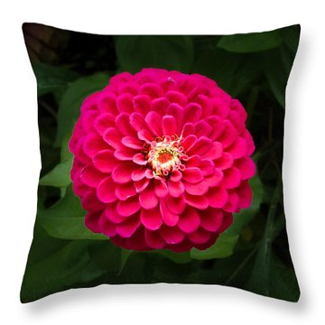 Zinnia In Bloom Square Throw Pillow