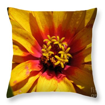 Zinnia Named Swizzle Scarlet And Yellow Throw Pillow by J McCombie
