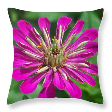 Throw Pillow featuring the photograph Zinnia Opening by Eunice Miller
