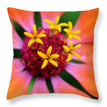 Throw Pillow featuring the photograph Zinnia Quintet by Elizabeth Sullivan