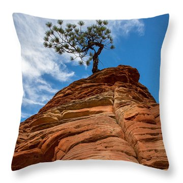 Zion Cypress Throw Pillow by John Daly