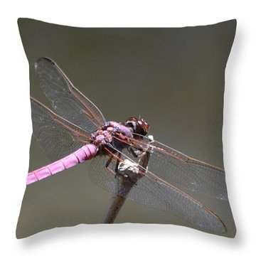 Zootography2 Pink Dragonfly Throw Pillow by Jeff at JSJ Photography