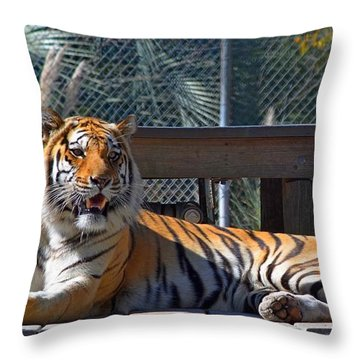 Zootography3 Tiger In The Sun Throw Pillow by Jeff at JSJ Photography