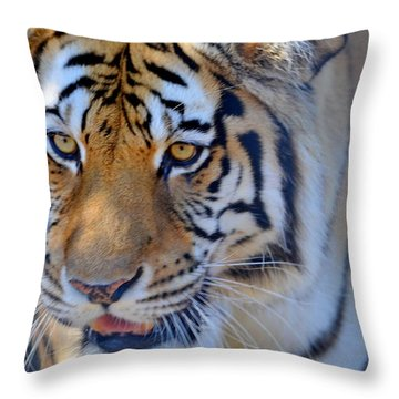 Zootography3 Tiger Prowl Close-up Throw Pillow by Jeff at JSJ Photography