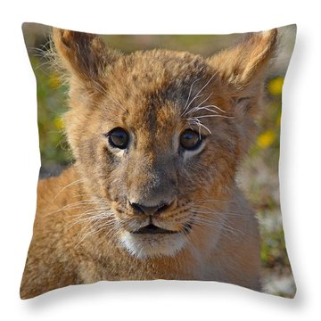 Zootography3 Zion The Lion Cub Throw Pillow by Jeff at JSJ Photography