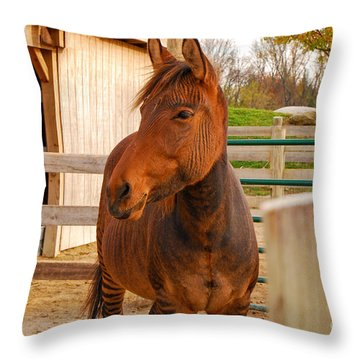 Zorse Throw Pillow by Mary Carol Story