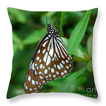 Throw Pillow featuring the photograph  Blue Tiger Butterfly by Eva Kaufman