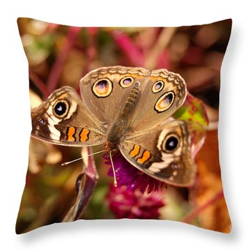 Throw Pillow featuring the photograph  Buckeye Butterfly  by Eva Kaufman