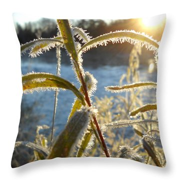 Frost On Willow At Sunrise Throw Pillow