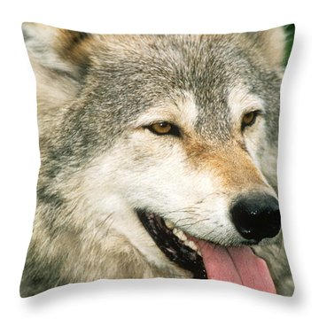 Happy Gray Wolf Throw Pillow by Larry Allan