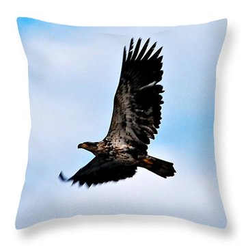 Throw Pillow featuring the photograph  Juvenile Bald Eagle by Peggy Franz