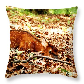 Throw Pillow featuring the photograph  Sweet Baby Elk by Peggy Franz