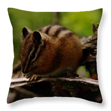 A Little Chipmunk Throw Pillow by Jeff Swan