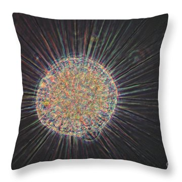 Actinosphaerium Lm Throw Pillow by Eric V Grave