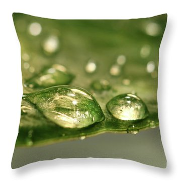 After The Rain Throw Pillow by Sandra Cunningham