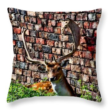 Against The Wall Throw Pillow by Isabella F Abbie Shores FRSA