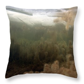 Algae In A Frozen Pond Throw Pillow by Ted Kinsman