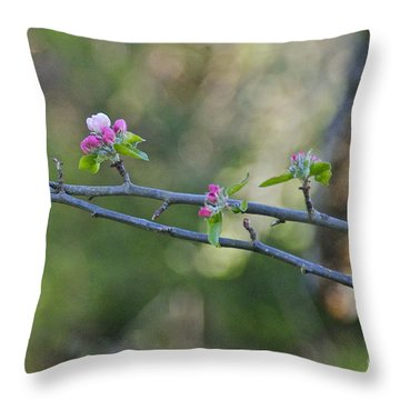 Apple Blossoms Throw Pillow by Sean Griffin