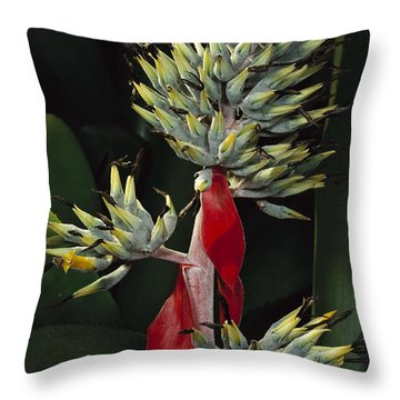 Atlantic Forest Bromeliad Brazil Throw Pillow by Mark Moffett