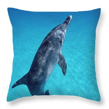 Atlantic Spotted Dolphin Portrait Throw Pillow by Flip Nicklin