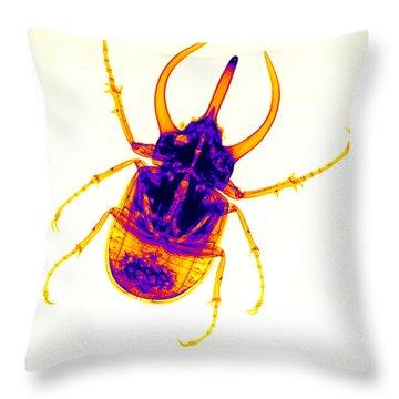 Atlas Beetle X-ray Throw Pillow by Ted Kinsman