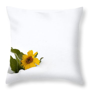 Balsamroot In Snow Throw Pillow by Hal Horwitz and Photo Researchers