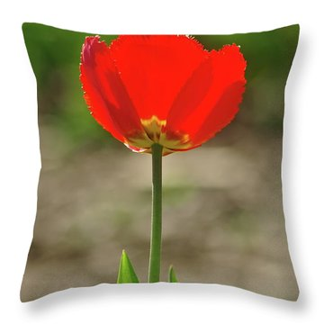 Throw Pillow featuring the photograph Beauty In Red by Dariusz Gudowicz