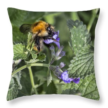 Throw Pillow featuring the photograph Bee by David Gleeson