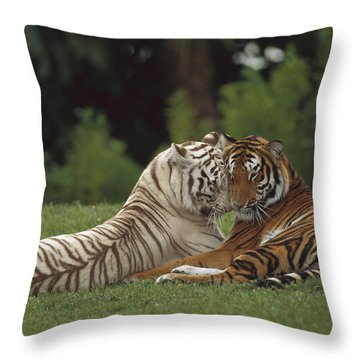 Bengal Tiger Panthera Tigris Tigris Throw Pillow by Konrad Wothe