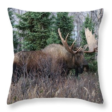 Throw Pillow featuring the photograph Big Boy by Doug Lloyd