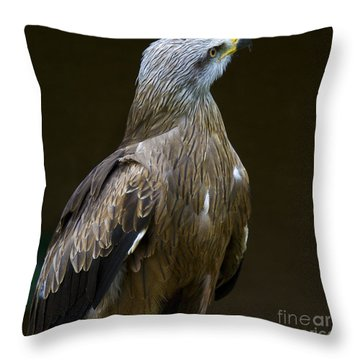 Black Kite 1 Throw Pillow by Heiko Koehrer-Wagner