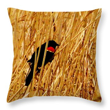 Blackbird In The Reeds Throw Pillow
