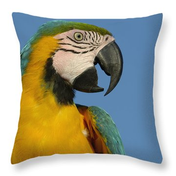 Blue And Yellow Macaw Ara Ararauna Throw Pillow by Pete Oxford