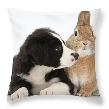 Border Collie Pup And Sandy Throw Pillow by Mark Taylor
