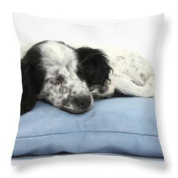 Border Collie X Cocker Sleeping Puppy Throw Pillow by Mark Taylor