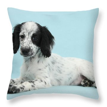 Border Collie X Cocker Spaniel Puppy Throw Pillow by Mark Taylor