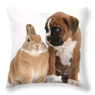 Boxer Puppy And Netherland-cross Rabbit Throw Pillow by Mark Taylor