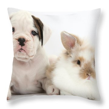 Boxer Puppy And Young Fluffy Rabbit Throw Pillow by Mark Taylor