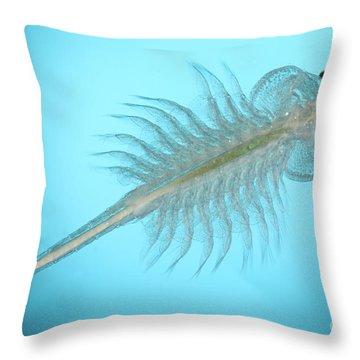 Brine Shrimp Throw Pillow by Ted Kinsman