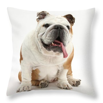 Bulldog Throw Pillow by Mark Taylor