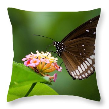 Butterfly Throw Pillow by Fotosas Photography