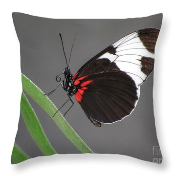 Throw Pillow featuring the photograph Butterfly  by Tam Ryan