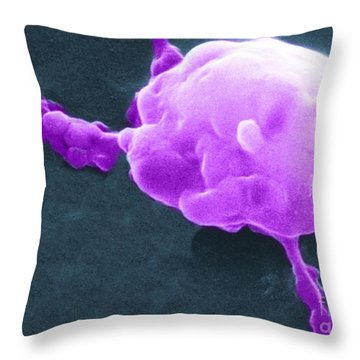 Cancer Cell Death, Sem 5 Of 6 Throw Pillow by Science Source
