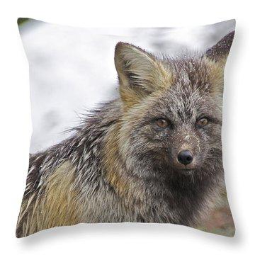 Cascade Red Fox Throw Pillow