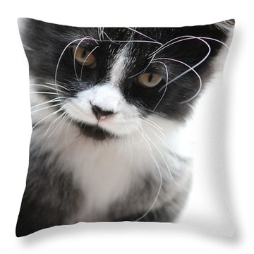 Cat In Chaotic Thought Throw Pillow