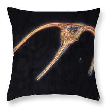 Ceratium Sp. Dinoflagellate, Lm Throw Pillow by Eric V. Grave