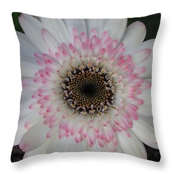 Throw Pillow featuring the photograph Charming by Tina Marie