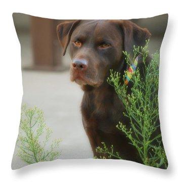 Chocolate Labrador - Womans Best Friend Throw Pillow by Donna Greene