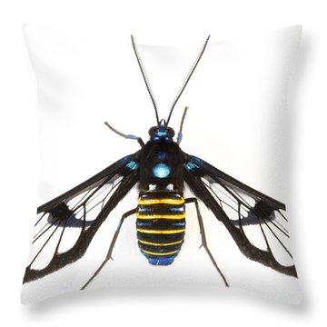 Clearwinged Tiger Moth Tapanti Np Costa Throw Pillow by Piotr Naskrecki